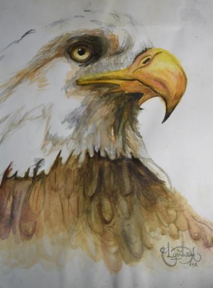 Eagle Eye Watercolour